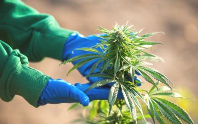 Marijuana Use May Prohibit Entry into the United States